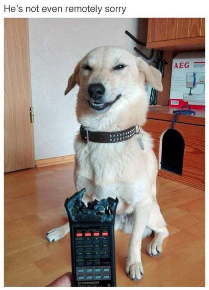 He looks so proud.
