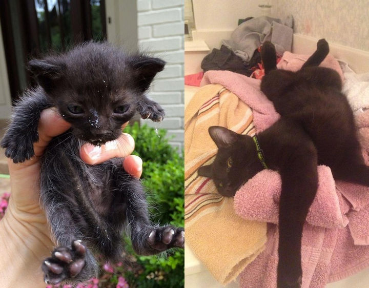 "29 Before and After Photos of Family Cats - ""Found abandoned in the gutter at 2 weeks old. Now fat and happy!!"""