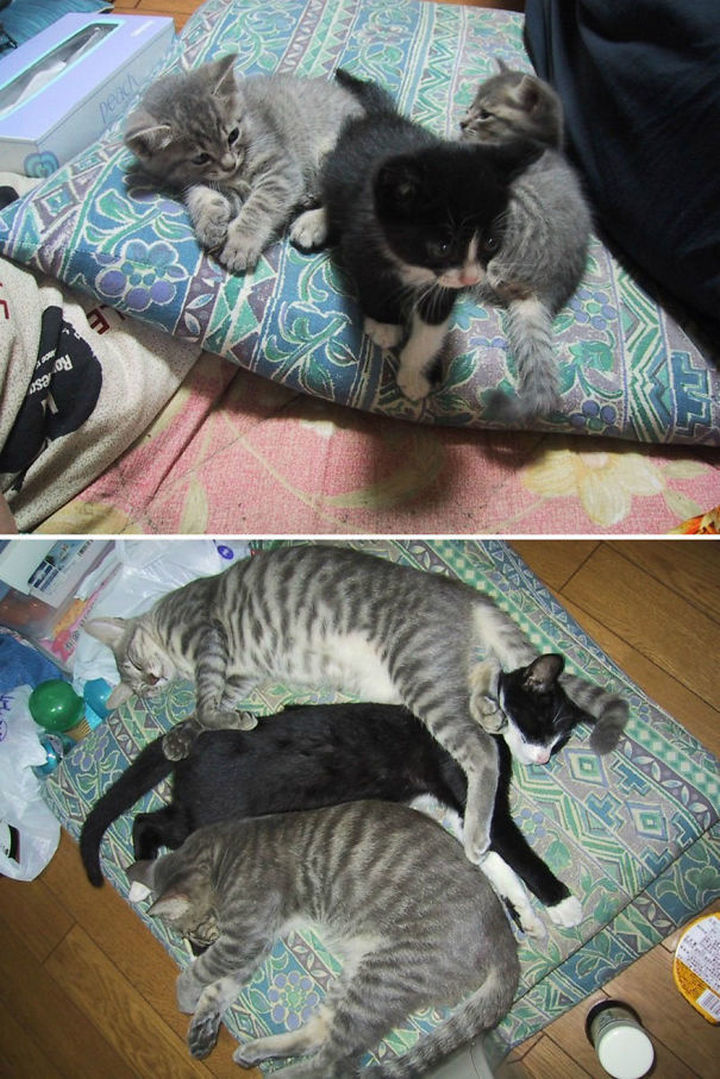 29 Before and After Photos of Family Cats - Three's company...