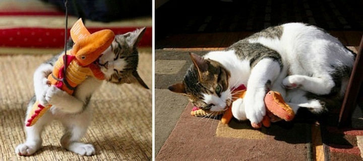29 Before and After Photos of Family Cats - Boys will be boys!
