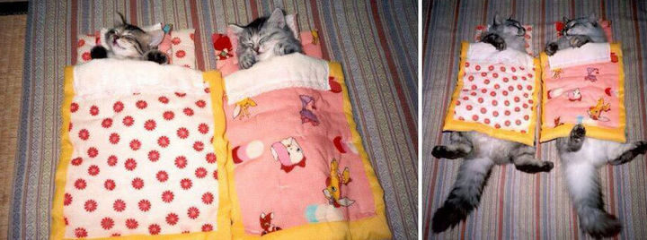 29 Before and After Photos of Family Cats - They still enjoy bedtime even if they outgrew their beds!