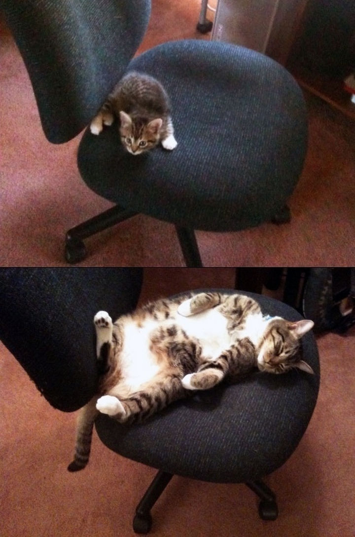 """29 Before and After Photos of Family Cats - """"This chair is all mine!"""""""