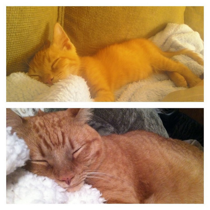 Rescue kitten is extremely content even 3 years later.