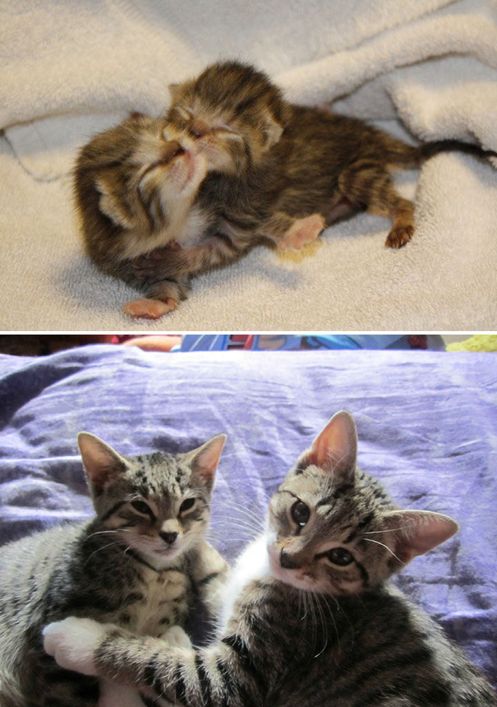 29 Before and After Photos of Family Cats - Best friends forever.