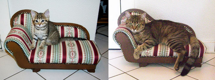 All grown up, she enjoy her sofa chair even more.