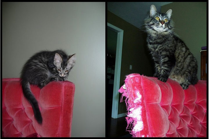 She didn't grow fond of her chair.
