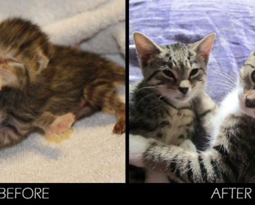 29 Before and After Photos Showing the Impact Having a Loving Family Has on Cats