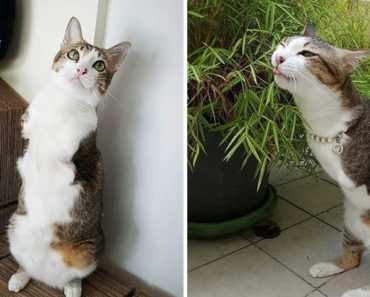 Able the Cat Only Has 2 Legs but That Doesn't Stop Him From Living Life.