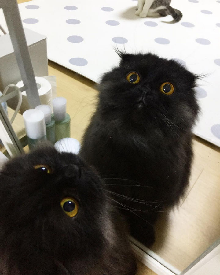 Cat eyes are always beautiful too look at but Gimo's eyes are on a whole different level of gorgeousness!
