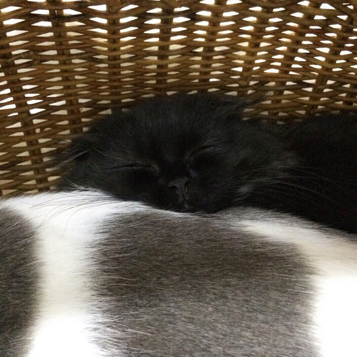 All that playing as made Gimo tired and he is just as cute when sleeping.