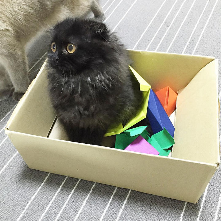 As you can tell, Gimo has lots of toys and hobbies to keep him busy.