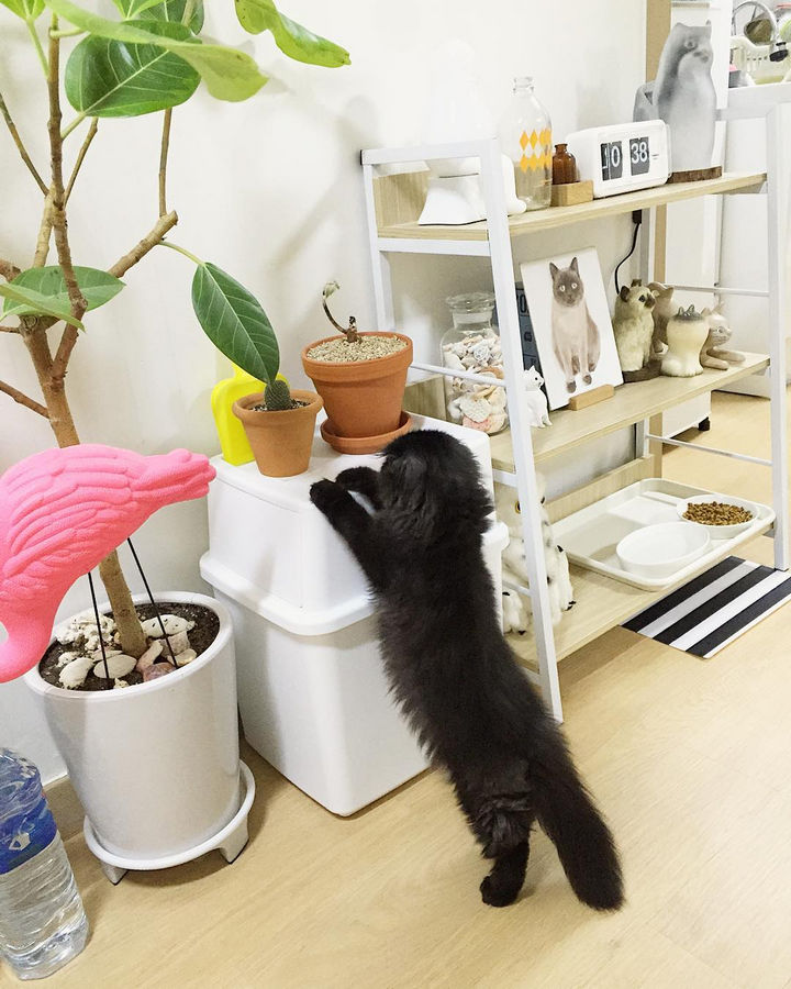 Gimo is a curious little guy and loves taking care of his plants.