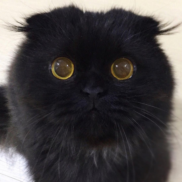 I still can't look away from Gimo's mesmerizing eyes, they are so beautiful!