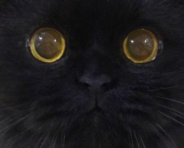 Gimo the Cat Will Mesmerize You With His Big, Bold Eyes!