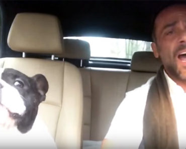 Junior the Bulldog Sings Diamonds Cover With His Human in the Car.