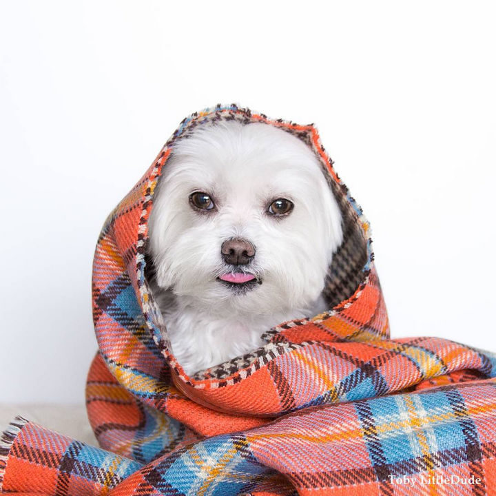 Nothing like staying home rolled up in your favorite plaid blanket.