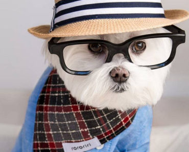 Meet Toby LittleDude, the Hipster Dog on Instagram That Is Totally Stylin'