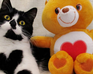 Meet Zoë, a Real-Life Care Bear That Literally Wears Her Heart on Her Chest