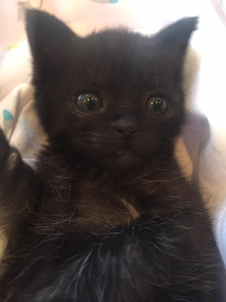 """Rob added, """"I called my wife, Sue, and told her we needed help urgently. She and our daughter, Louise, quickly arranged to pick up Billy the kitten and delivered him to The Kitten Cottage."""""""