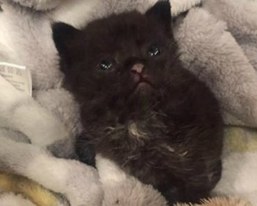 This Kitten Survived Without Food or Water for Over 3 Days Before Being Rescued