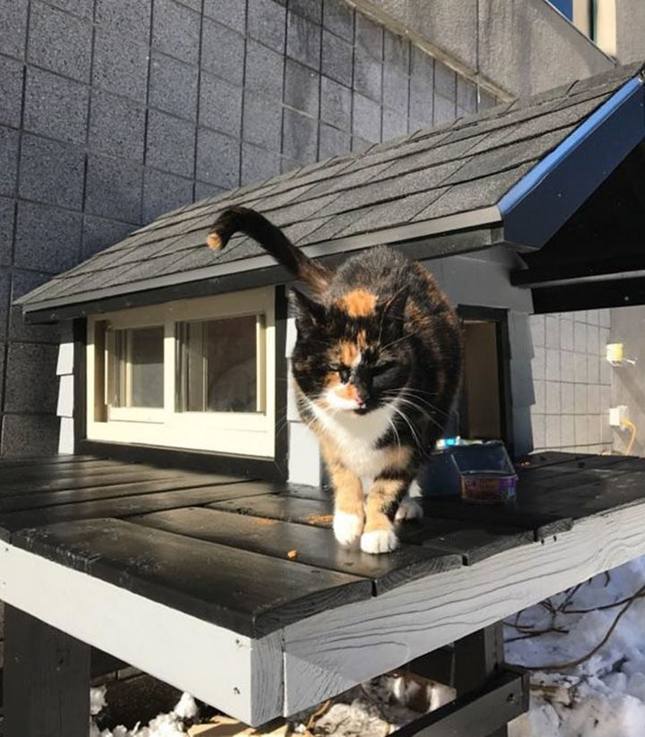 """According to their website, """"SWAT Cat moved right in and looks very happy with her new custom kitty accommodations."""""""