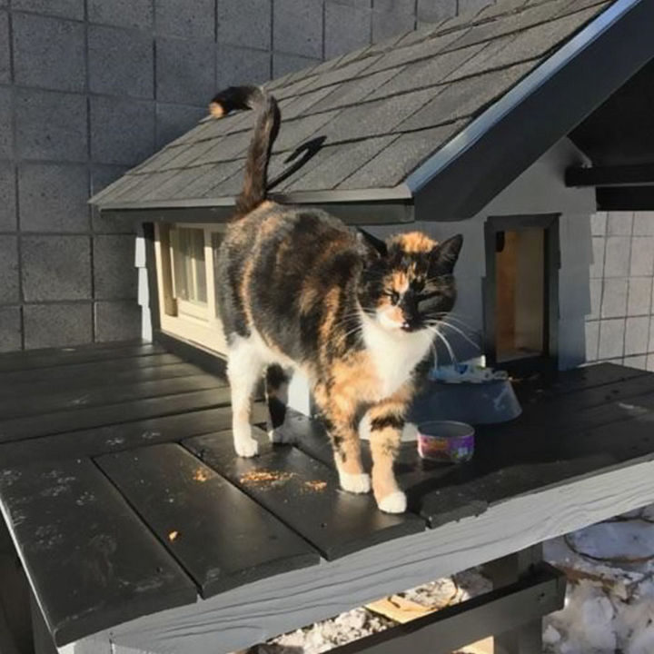 She couldn't be happier and kudos to the Boston Police SWAT Team for building a warm kitty condo for their lovable SWAT cat.