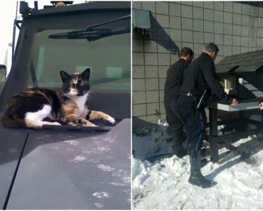 "Boston Police SWAT Team Build a Cat Condo for Their Stray ""SWAT Cat."""