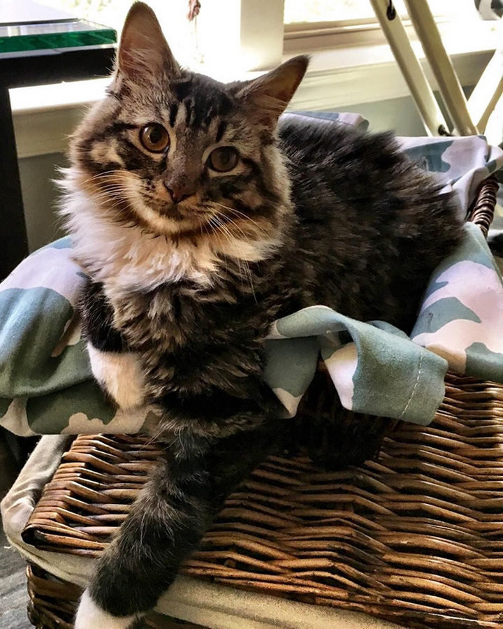 Thanks to her loving family, Little Roo Russ isn't so little anymore! She has grown into a beautiful cat and you wouldn't even know she had a disability to begin with.
