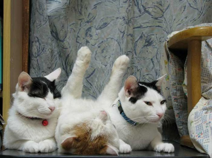 23 Amusingly Lazy Cats - All passed out.