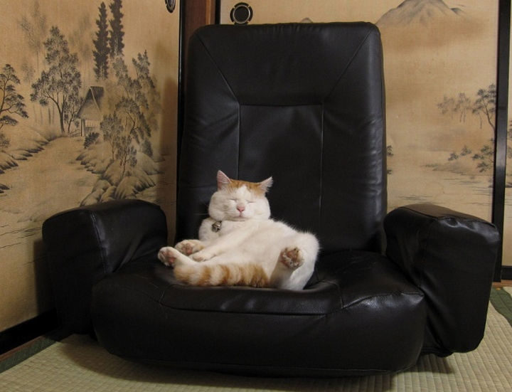 23 Amusingly Lazy Cats - It must have been a long day.