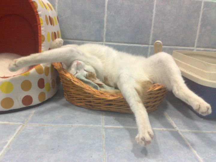 "23 Amusingly Lazy Cats - ""If it fits, I sits...or sleep."""