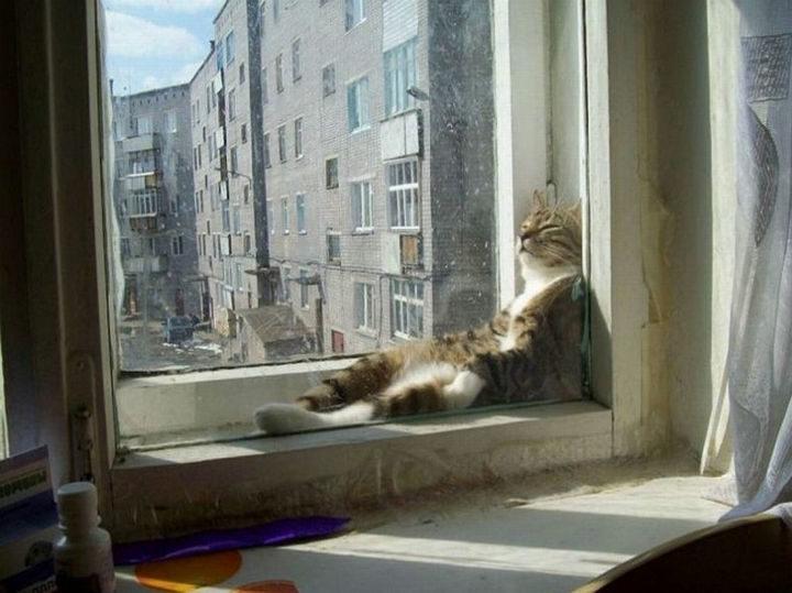 23 Amusingly Lazy Cats - Sleeping in the sun feels soooo nice.