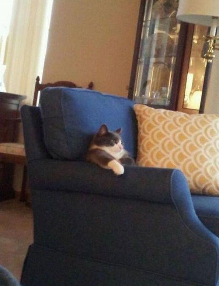 23 Amusingly Lazy Cats - A couch catato?