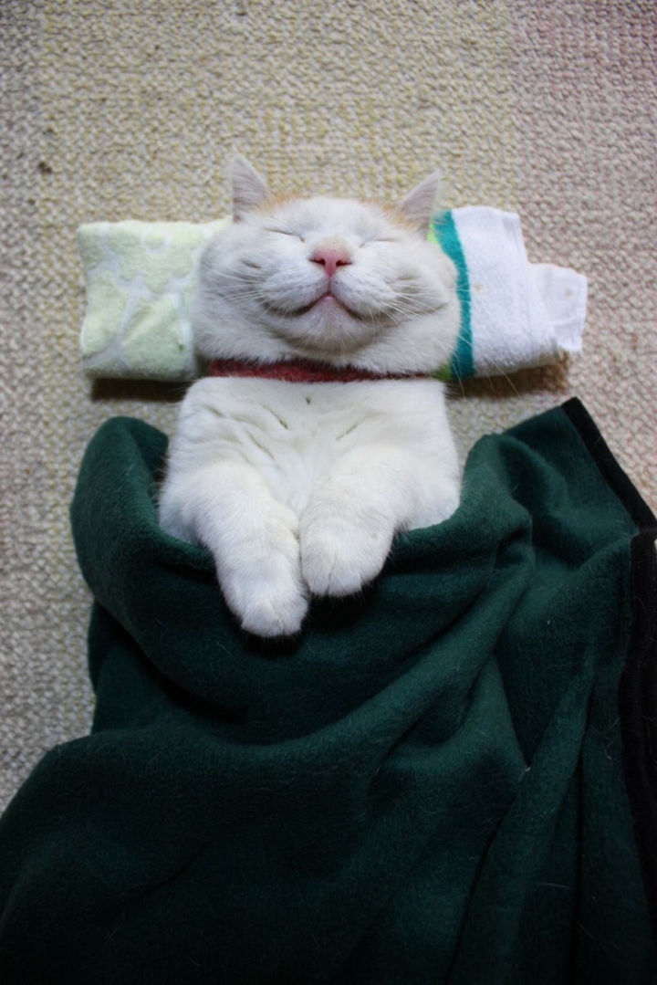 23 Amusingly Lazy Cats - He looks so comfortable.