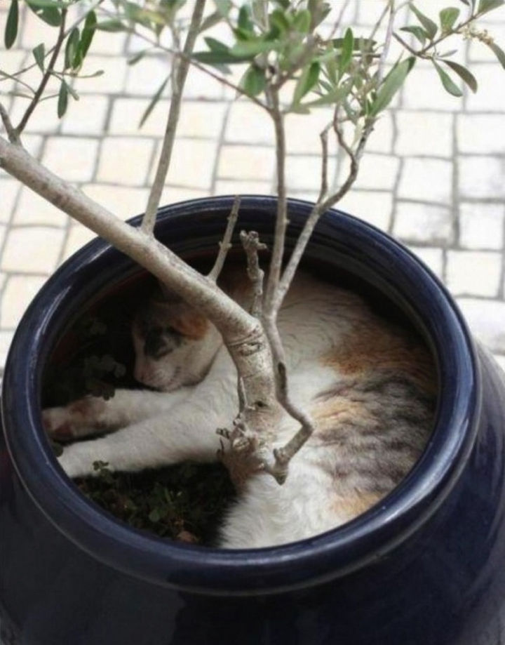 23 Amusingly Lazy Cats - Hide and seek: level 9000.