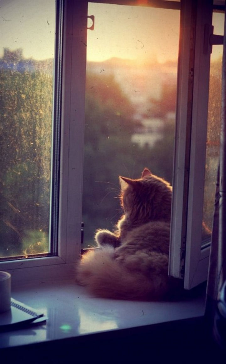 23 Amusingly Lazy Cats - Warm breeze and watching the sunset. Life is good...
