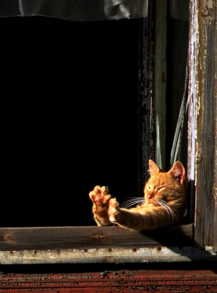 23 Amusingly Lazy Cats - Time to stretch then sleep some more.