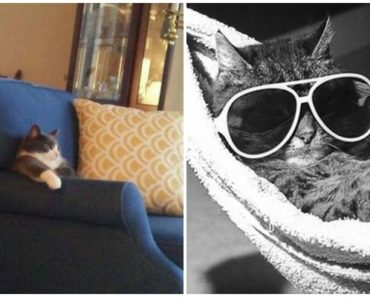 23 Amusingly Lazy Cats in the Ultimate State of Relaxation.