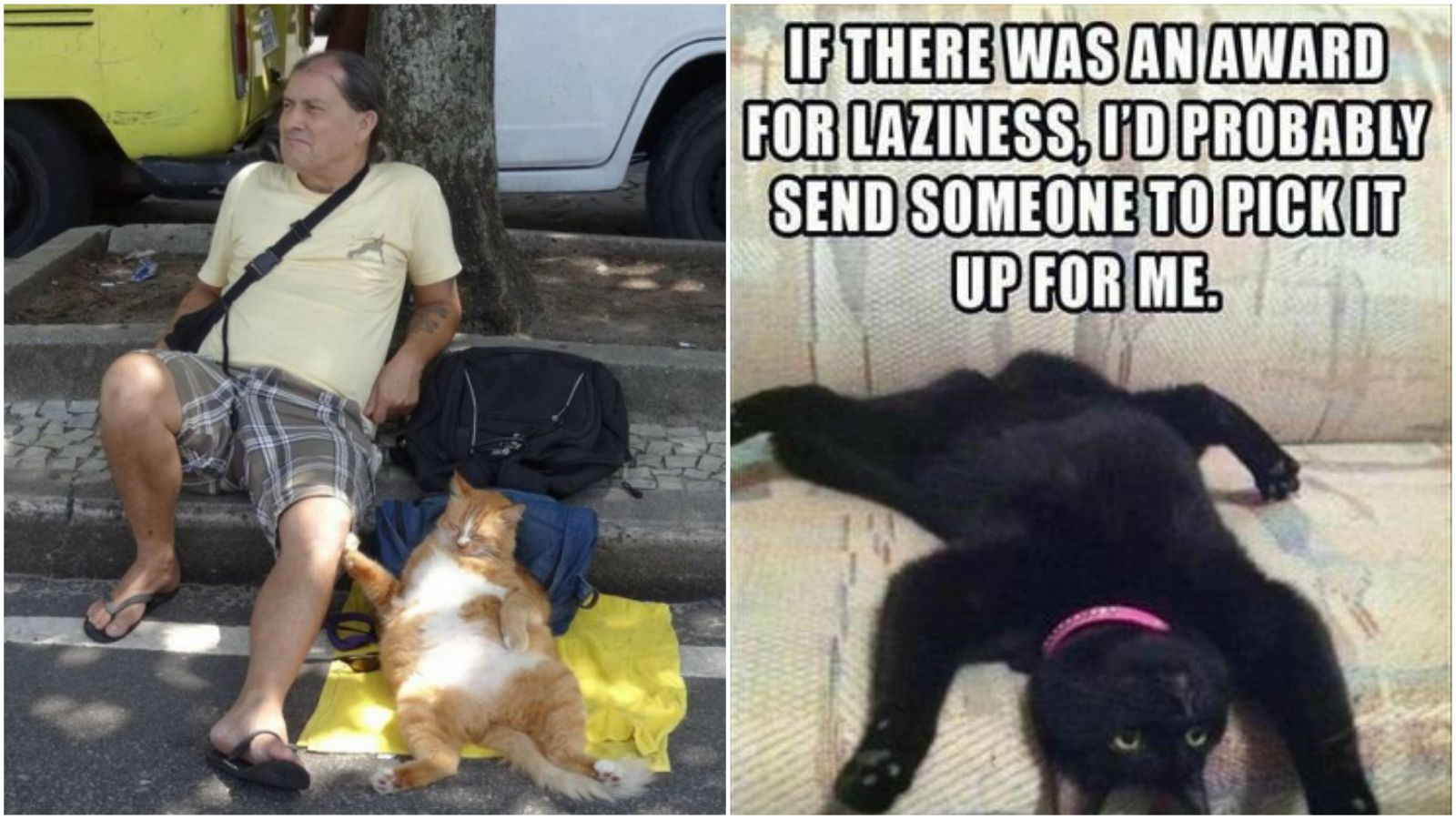 23 Amusingly Lazy Cats That Have Achieved the Ultimate State of Relaxation