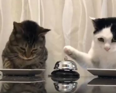 Hilarious Cats Ring Bell to Get Kitty Treats. They Would Make Pavlov Happy!