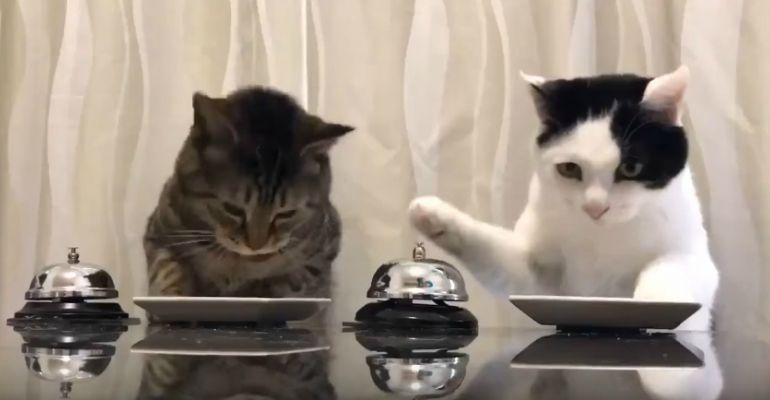 Cats Ring Bell For Treats Youtube