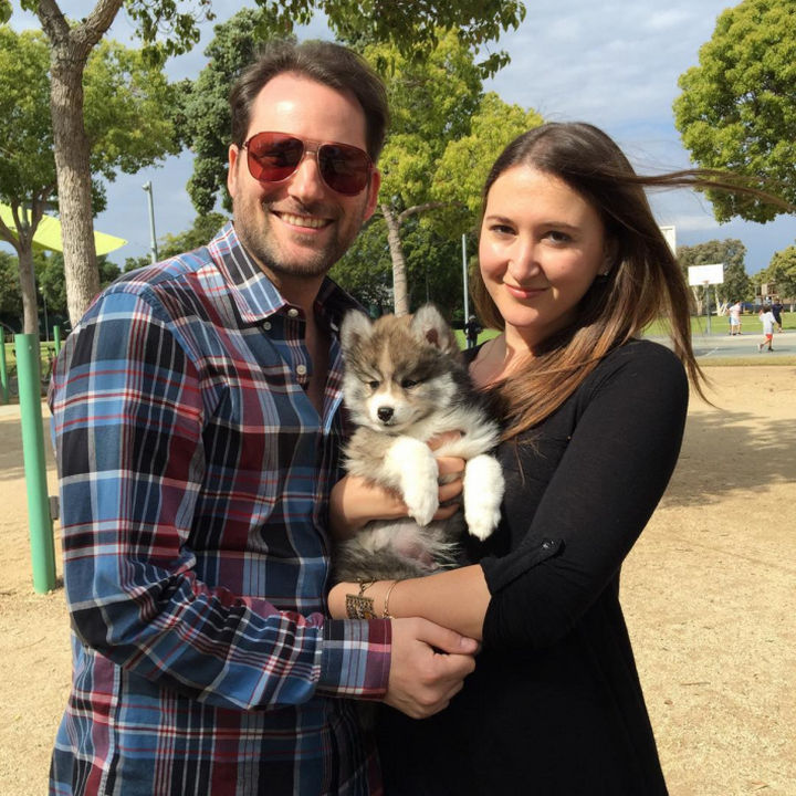 Norman the Pomsky has a great family to grow up with. His humans, Rachel and Matt from Los Angeles adopted him.