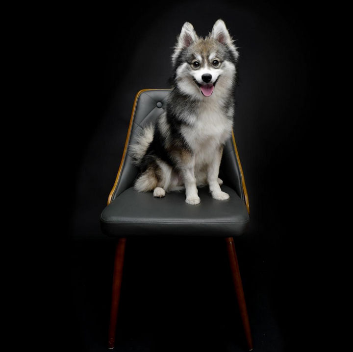 According to PetGuide.com, Pomsky puppies are the hottest puppies of 2016 and I wouldn't be surprised if this extended into 2017 also.