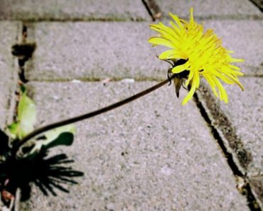 10 Easy DIY Ways to Kill Weeds Naturally and Effectively.