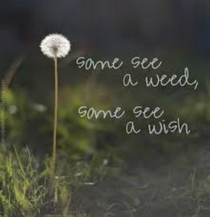 "10 Perspective Quotes - ""Some see a weed, some see a wish."""