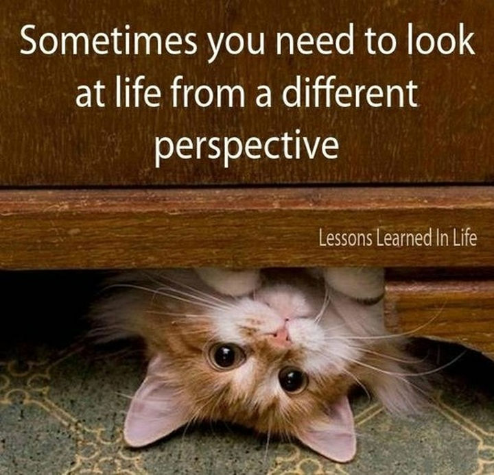 "10 Perspective Quotes - ""Sometimes you need to look at life from a different perspective."""