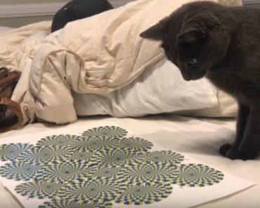 He Shows His Cat an Optical Illusion and What He Does NEXT Will Have You LOL!