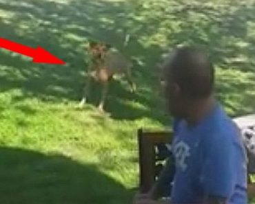 Dog Doesn't Recognize Owner After Weight Loss Until He Sniffs Him.