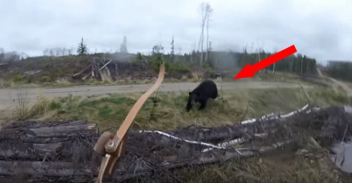 Black Bear Charges Towards Hunter (Richard Wesley) in Fire River, Ontario.