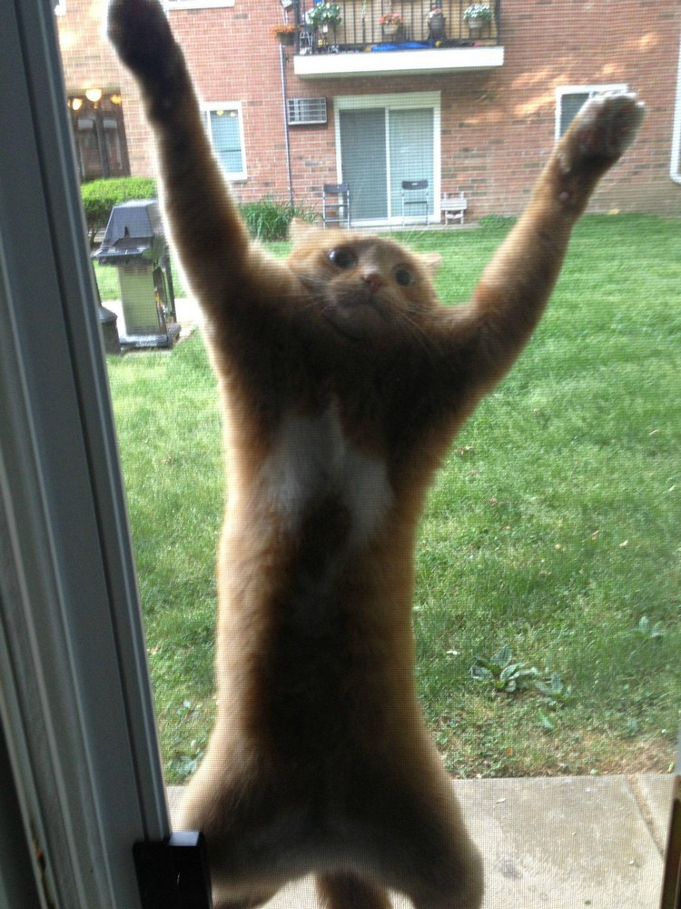 30 Cats Making Poor Life Choices - This cat that just got stuck climbing a screen door.